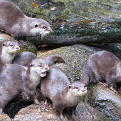 <strong></strong><br><p>Otters</p>