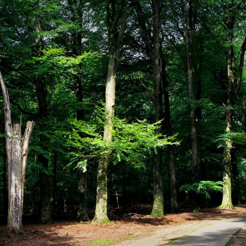 <strong></strong><br><p>de Veluwe</p>