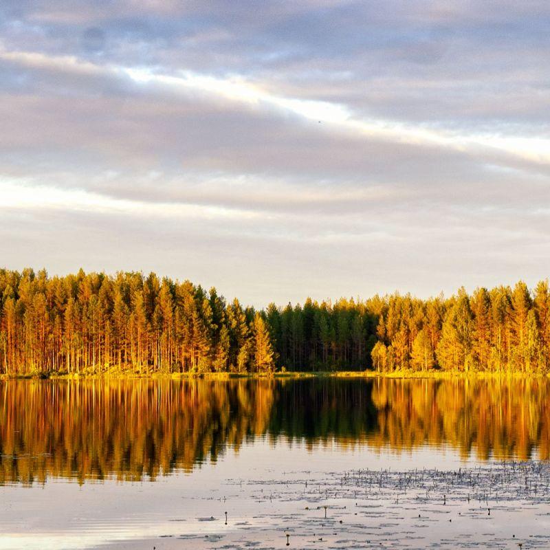 <strong>Zweden</strong><br><p>Park Glaskögen</p>