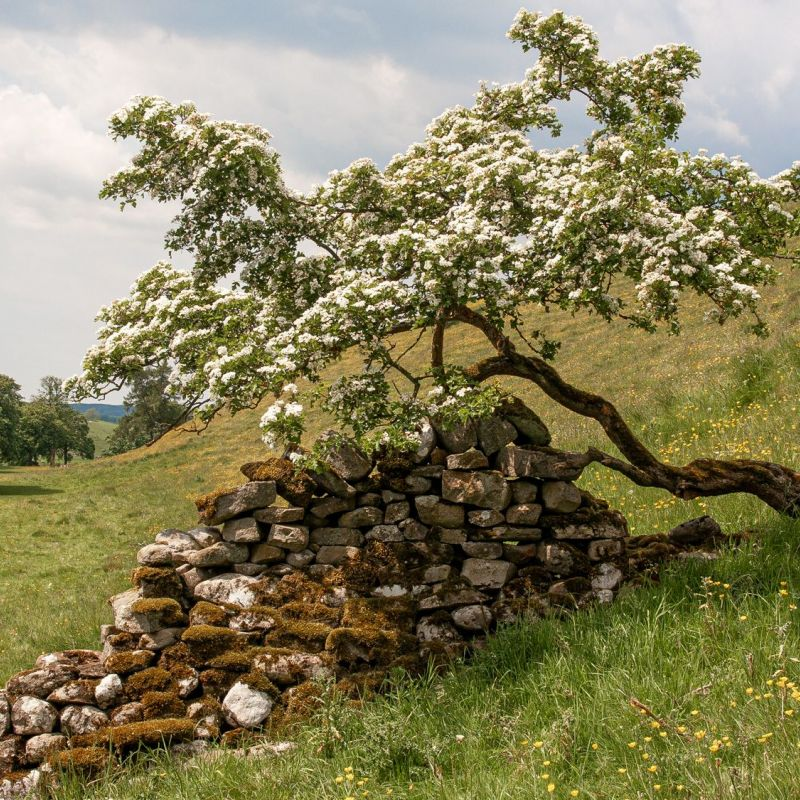 <strong>Engeland</strong><br><p>Yorkshire dales</p>