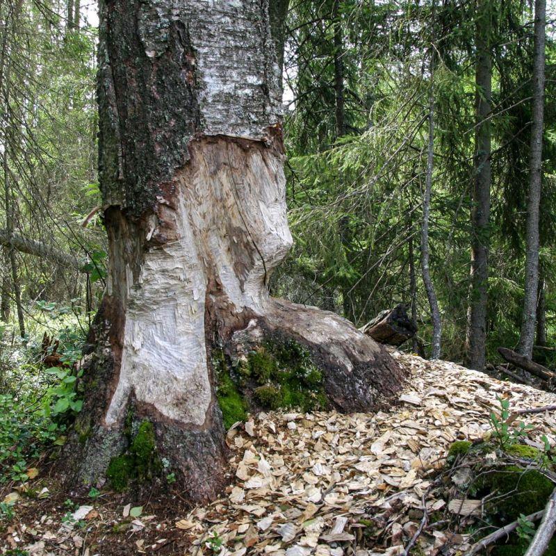 <strong>Zweden</strong><br><p>park Glaskogen</p>