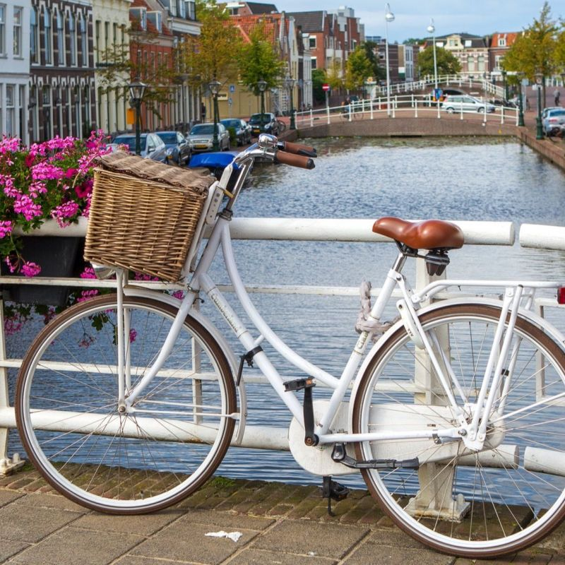 <strong>Leiden</strong><br><p>Mare</p>