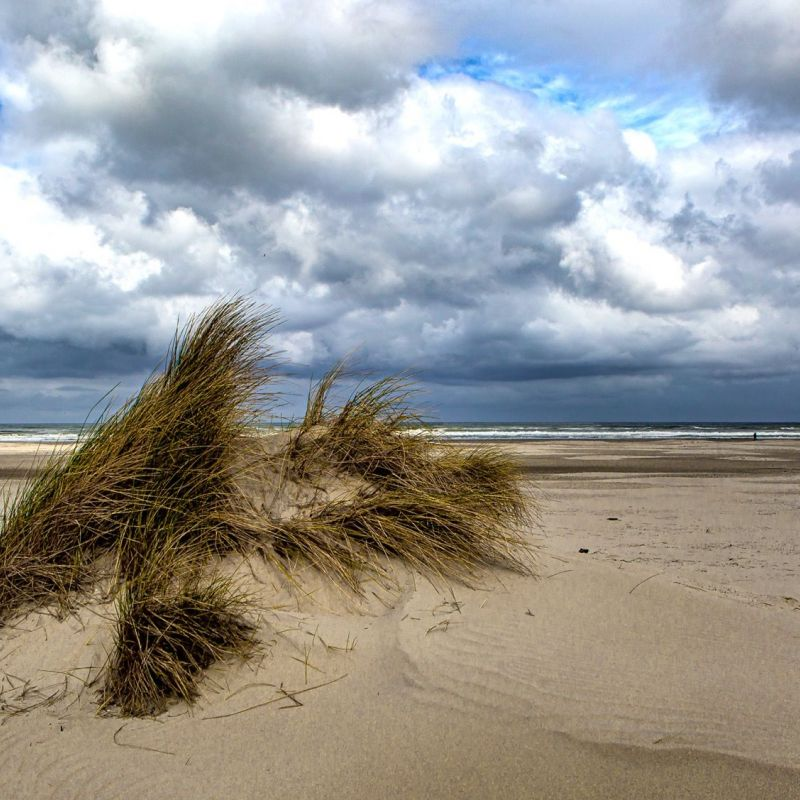 <strong></strong><br><p>Terschelling, strand</p>